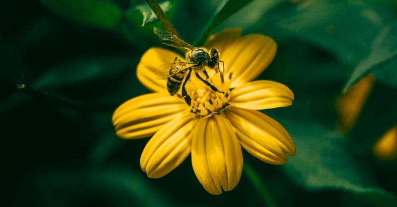 L'appello degli scienziati su api e pesticidi: riconsideriamo il modo di coltivare per salvare il pianeta