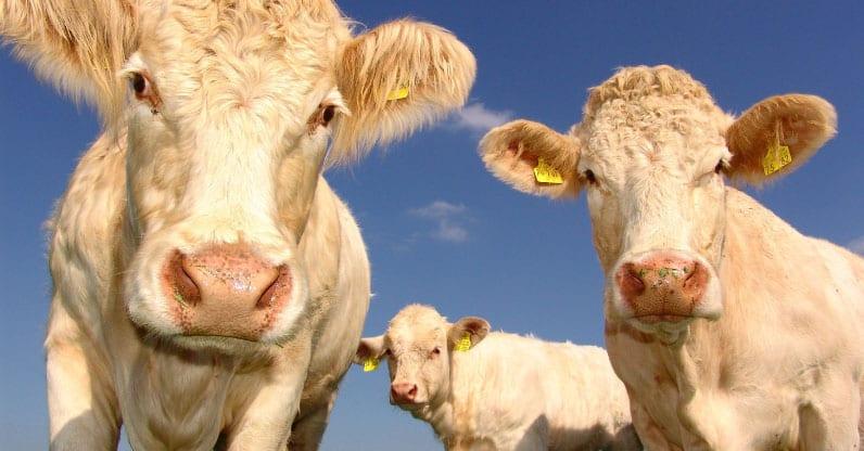 Gli antibiotici nella carne potrebbero danneggiare il nostro equilibrio intestinale