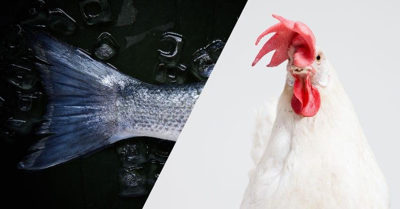 """Parte la campagna informativa del CREA: """"Fish&Chicken"""" biologico"""