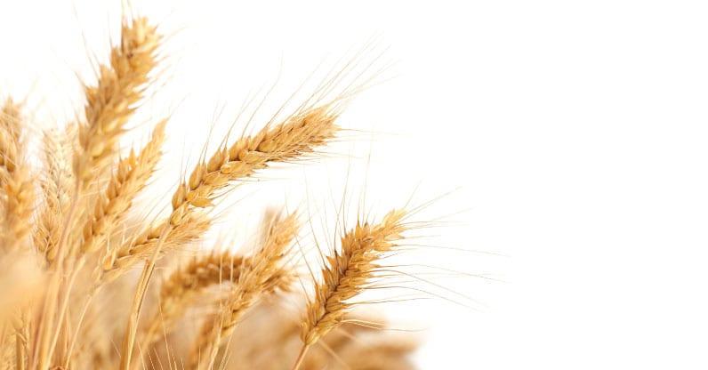 Coltiviamo la diversità. Un mese di cereali 2018.
