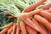 Simposio internazionale di agricoltura biologica: una prospettiva di ricerca (Organist)
