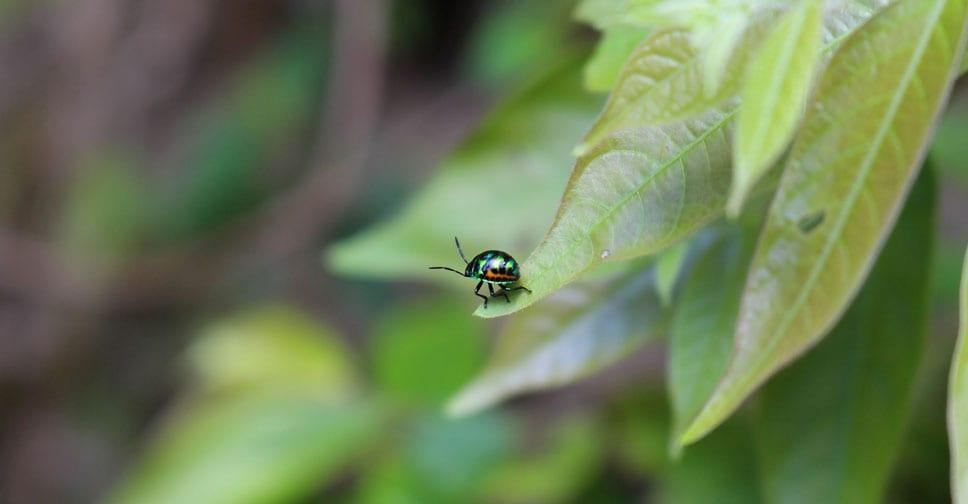 C3A e Centro Ricerca e Innovazione FEM stanno sviluppando un'alternative al rame e agli insetticidi