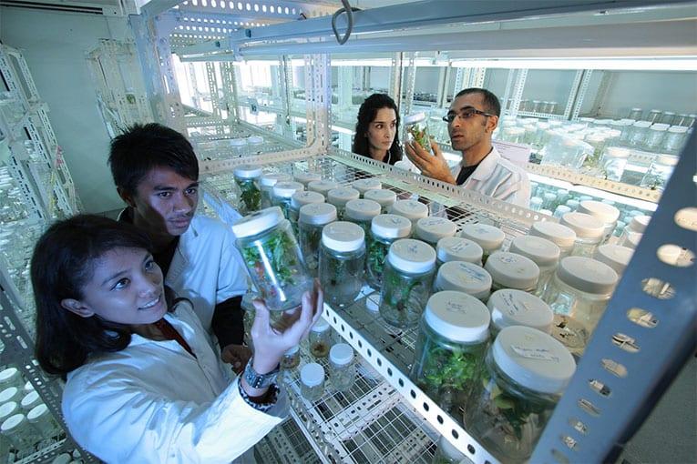 Il CREA, Centro di Ricerca Orticoltura e Florovivaismo, propone una giornata di incontro tra ricercatori e  operatori del settore interessati al biologico