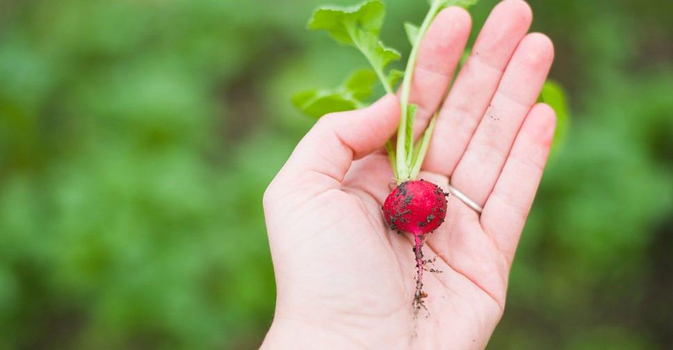 L'agro-ecologia come risposta al problema della produzione alimentare mondiale