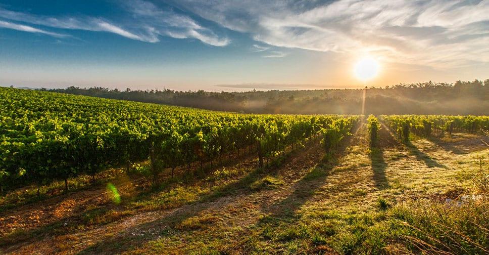 Italia, Francia e Germania sulla TOP3 della  Food Sustainability Index