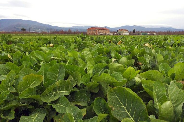 Rapporto Ismea: Primato storico per l'esportazioni agroalimentari italiane