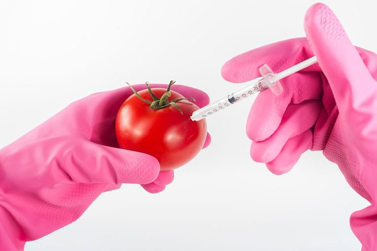 Corte di giustizia europea: Nuove tecniche di ingegneria genetica da regolamentare come OGM