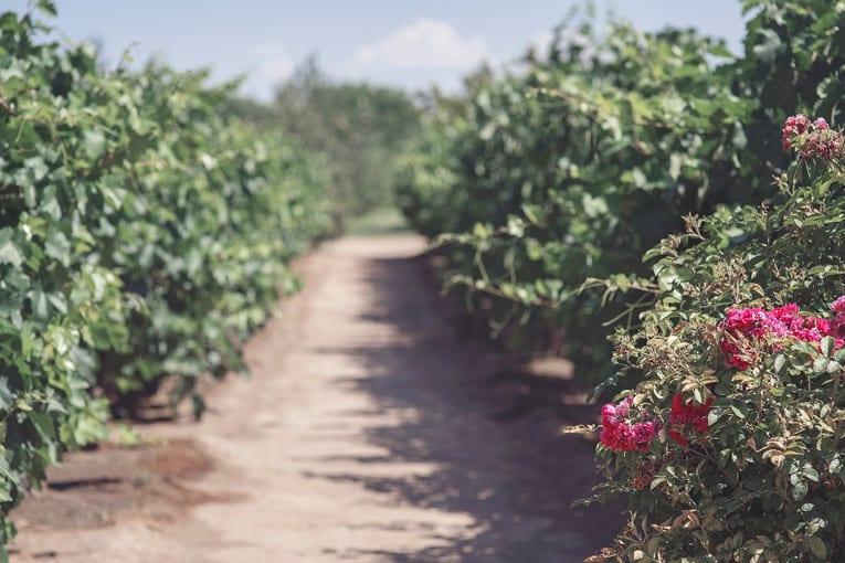 #CambiamoAgricoltura organizza un incontro per analizzare la nuova PAC