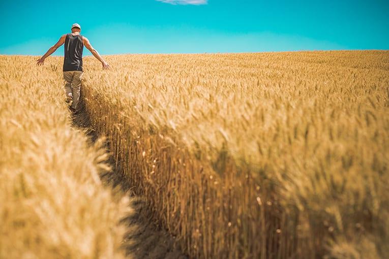 Il biologico cresce in Emilia-Romagna: la regione premia le aziende