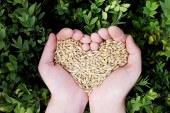 Verso l'Agricoltura Biologica
