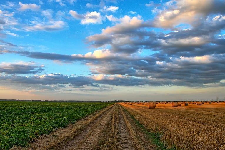 Progetto CLIFT: agricoltori e consumatori percepiscono gli effetti dei cambiamenti climatici? Il CNR-IBMET, in collaborazione con Suolo e Salute, propone un questionario conoscitivo.