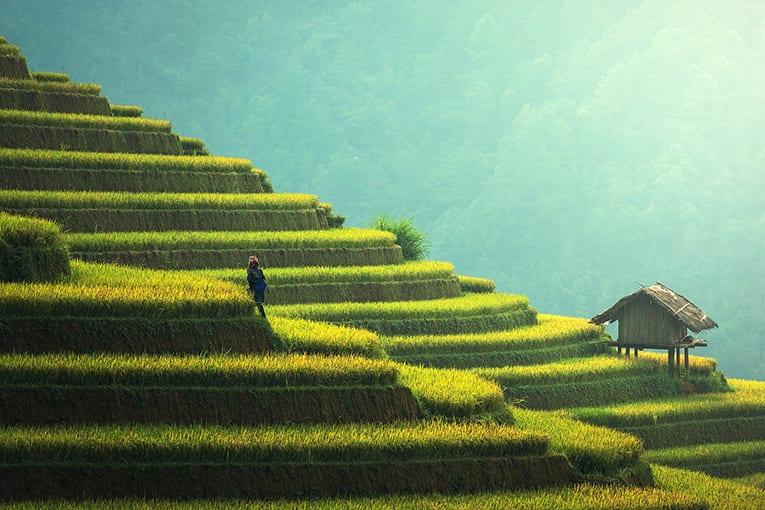 Sikkim: il punto di partenza per raggiungere un'agricoltura interamente biologica