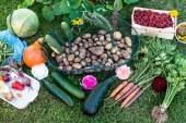 Tecnologia informatica e agricoltura biologica insieme: a Roma nasce Youfarmer