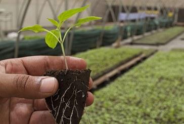 Rapporto GreenItaly: L'Italia al primo posto con più aziende agricole gestite dai giovani