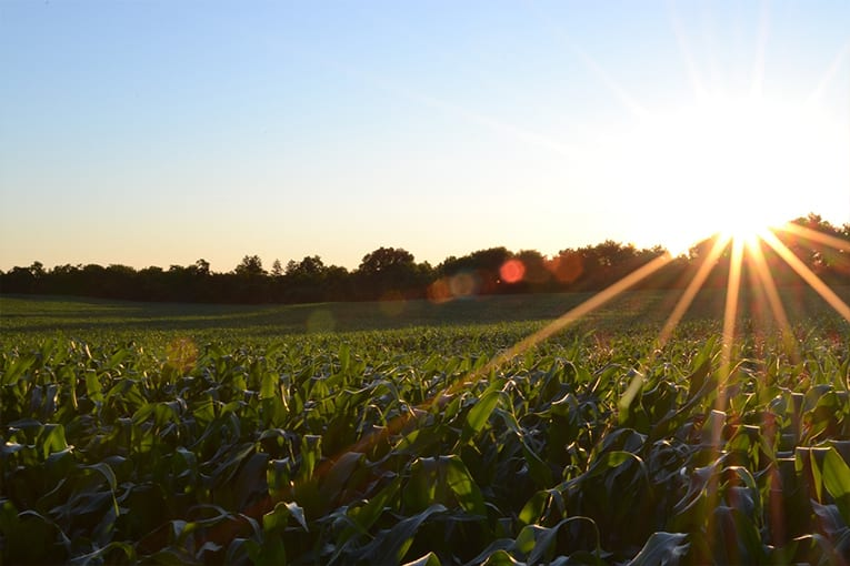 Rapporto GreenItaly 2018: l'agricoltura italiana è la più green d'Europa