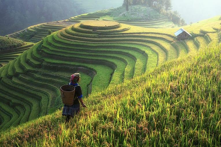CINA: biologico e sostenibilità sono il futuro dell'agricoltura