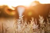 Biologico: approvata la proposta per la tutela del settore