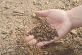 Il Suolo è una risorsa vitale per la biodiversità e l'agricoltura