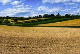 Basilicata: approvata la deroga sulle rotazioni colturali in agricoltura biologica