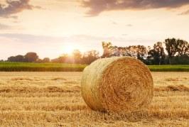 L'agricoltura biologica e il suo contributo per lo sviluppo sostenibile delle aree rurali