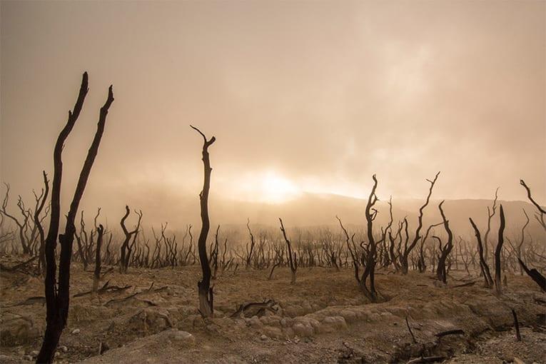 Bioreport CREA: il biologico è innovazione e aiuta a placare il problema climatico