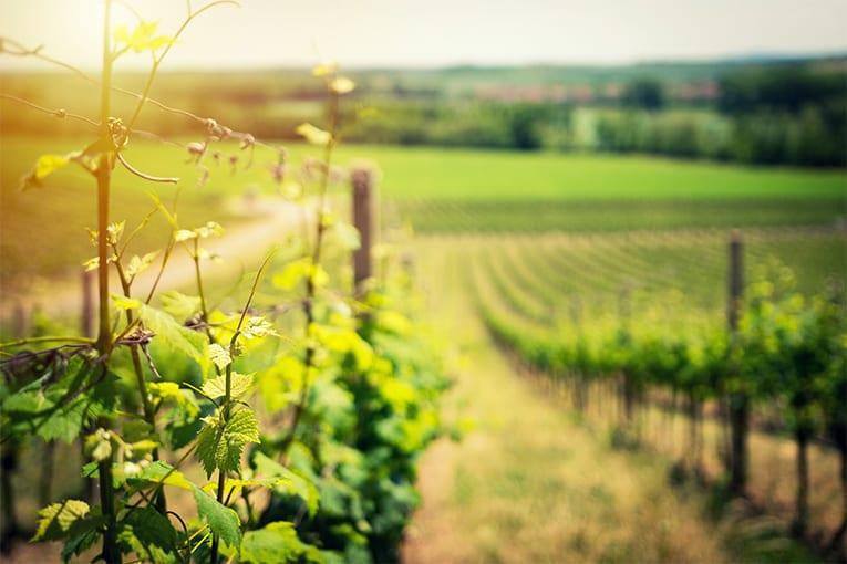Utilizzo del rame in agricoltura biologica: chiarimenti dal Mipaaft