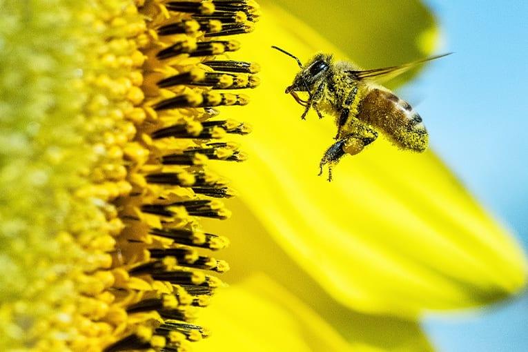 La FAO lancia l'allarme: con la perdita di biodiversità, la sicurezza alimentare è a rischio