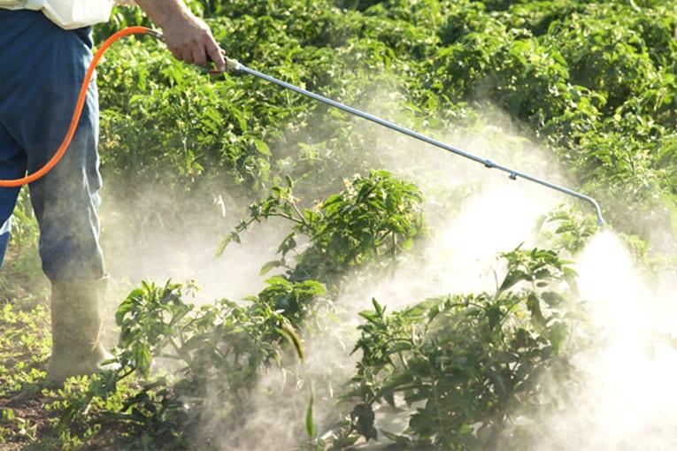 Caso Monsanto: danni da oltre 80.000 di dollari a Bayer