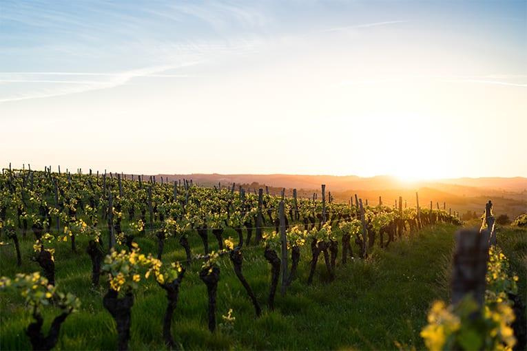 Viticoltura bio in Italia: in sei anni è triplicata