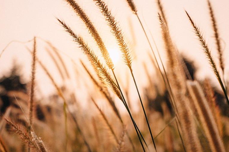 L'agricoltura biologica è l'unica sostenibile