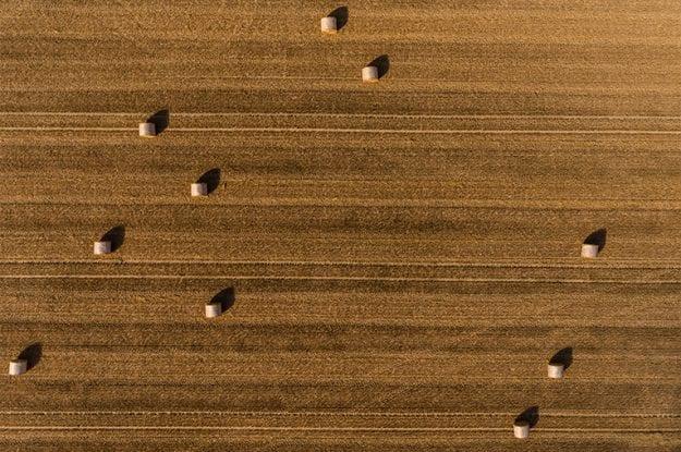 """""""Confronto tra tecniche e opportunità"""" sull'agricoltura biologica"""