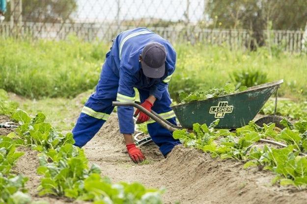 Lavoro nei campi: il biologico tutela i lavoratori