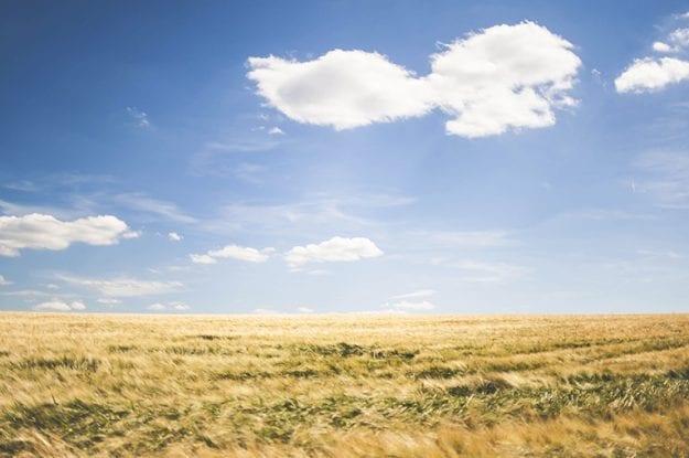 FederBio risponde allo studio svedese dedicato all'agricoltura biologica