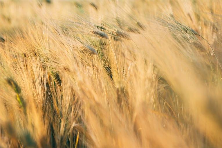 Numero record di aziende francesi convertite a biologico