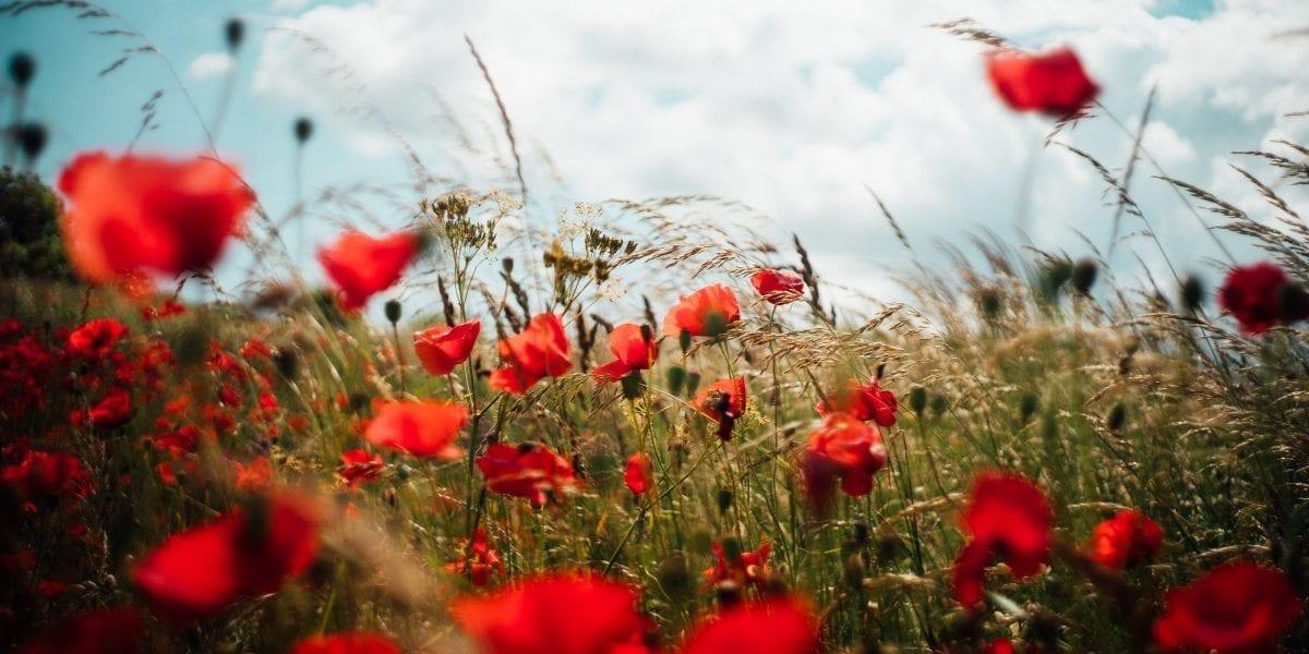 Anabio-Cia realizzano la Carta dei Valori a tutela del settore bio