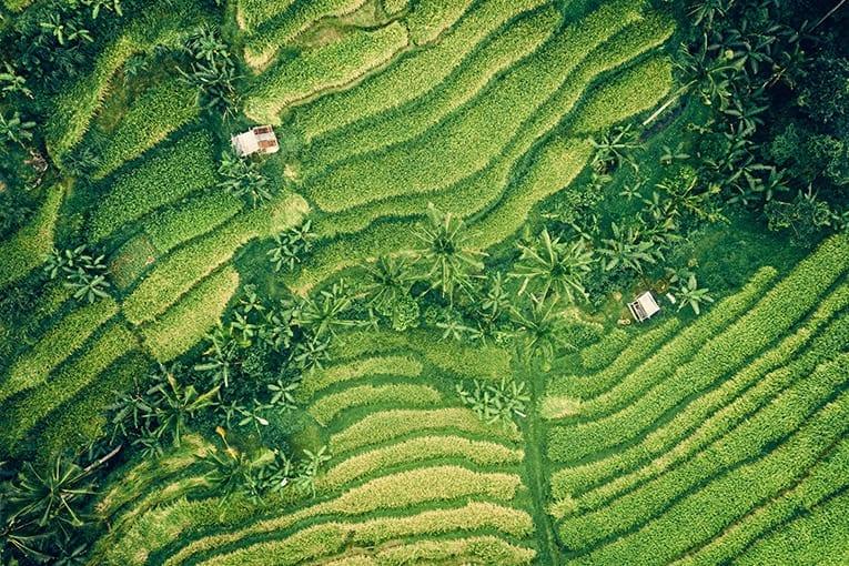 FAO: nuova dirigenza e nuove politiche