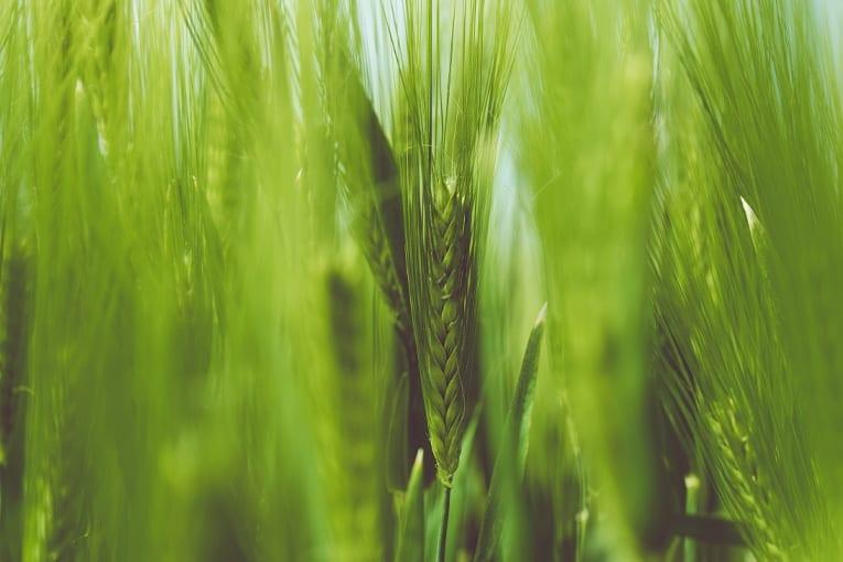 """""""Dalla rivoluzione verde alla Rivoluzione Bio"""" agli Stati generali del bio"""