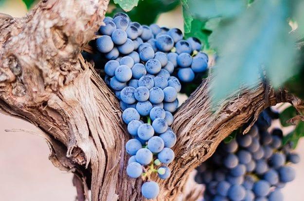 Nuove prove sperimentali in viticoltura e frutticoltura bio