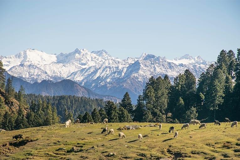 """""""La tutela della biodiversità nei siti Natura 2000 e nelle aree naturali protette. Opportunità e sfide per lo sviluppo rurale"""""""
