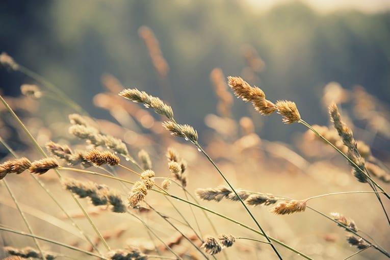 Spagna: primo produttore di ortofrutta bio in Europa