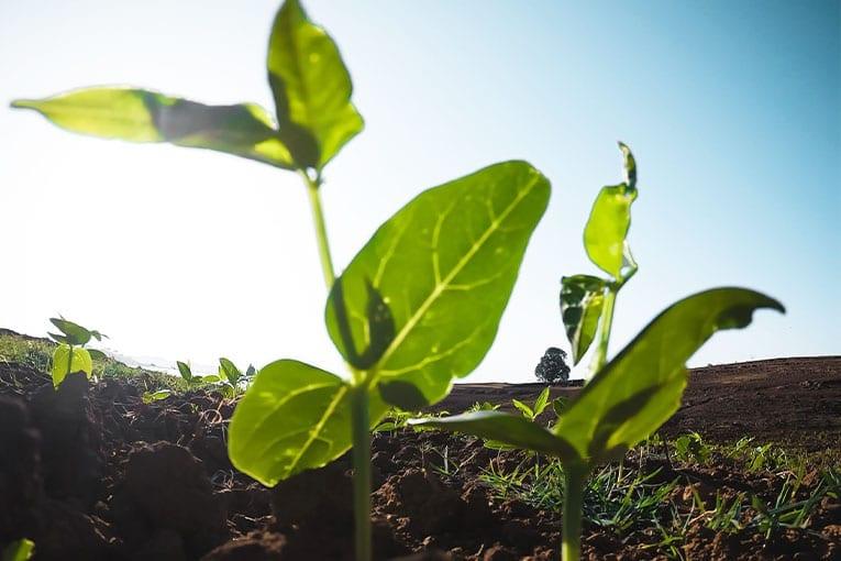 Horizon 2020 mette a disposizione nuovi fondi per l'agricoltura biologica
