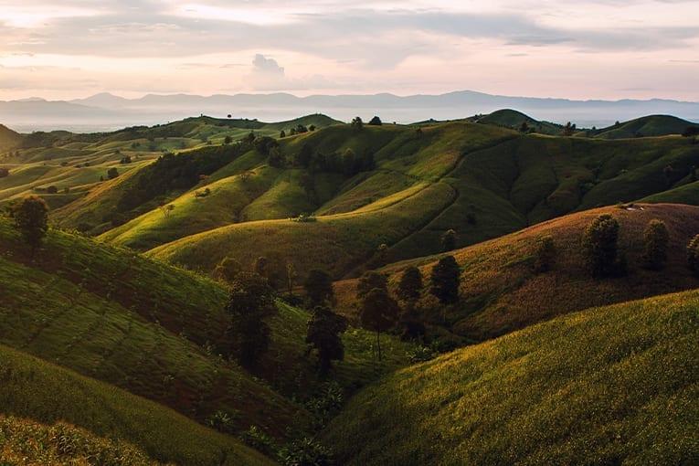 Toscana: entro il 2021 diventerà glifosato free