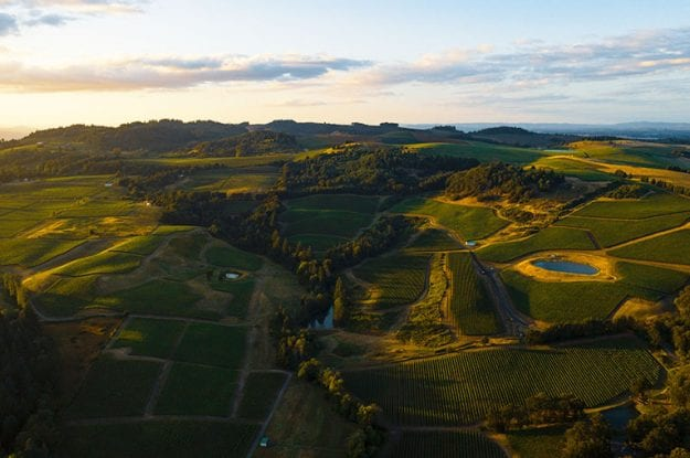 L'Emilia-Romagna si muove a favore del biologico e della protezione dell'ambiente