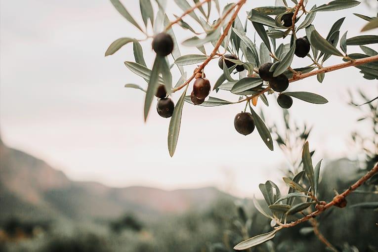 Sicilia: 170 milioni per il biologico
