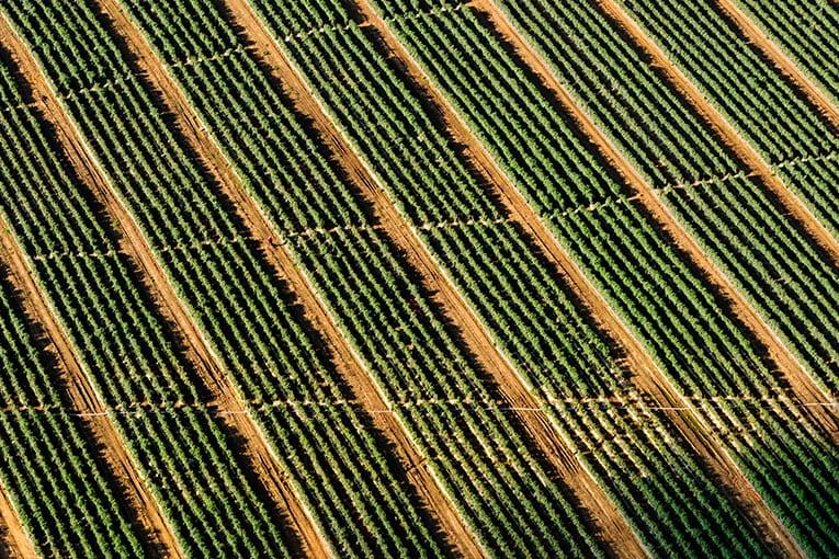 Europa: dal 2012 la superficie coltivata a biologico è cresciuta del 34%
