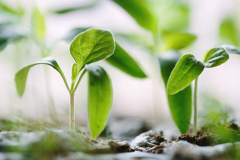 PAN 2020-2024: un'agricoltura attenta a salute, persone e ambiente