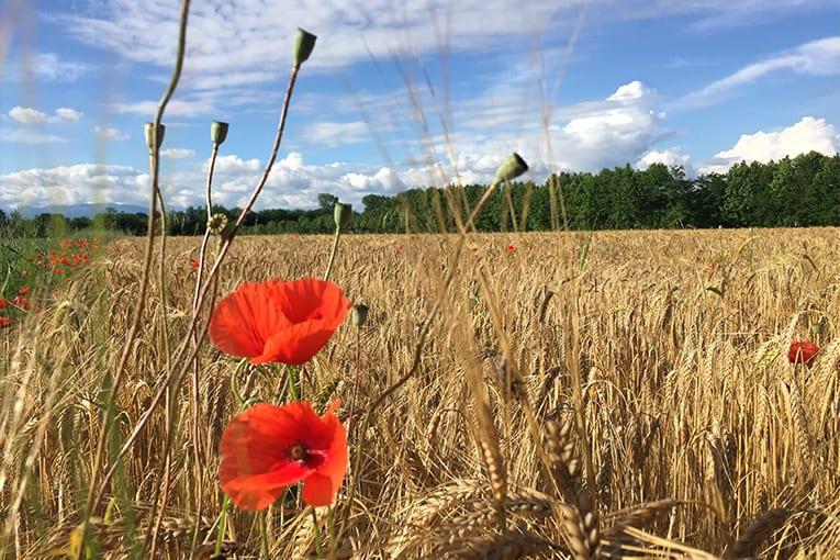 Nuovi finanziamenti per l'agricoltura