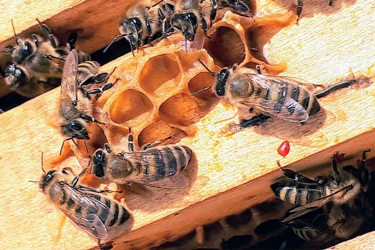 """""""Save Bees and Farmers! Verso un'agricoltura favorevole alle api per un ambiente sano"""""""