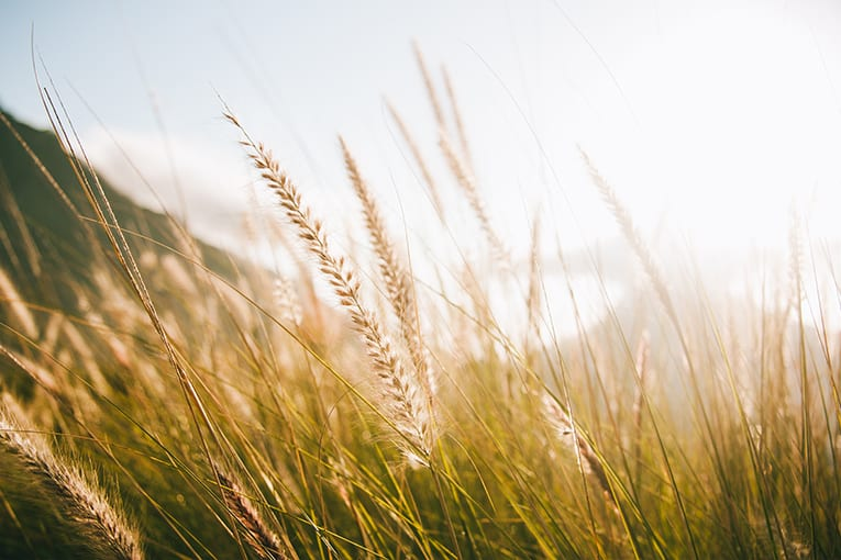 Decreto 31 marzo 2020 del MIPAAF: Proroga di termini e deroghe alla normativa del settore agricolo a seguito delle misure urgenti adottate per il contenimento e la gestione dell'emergenza epidemiologica da COVID-19