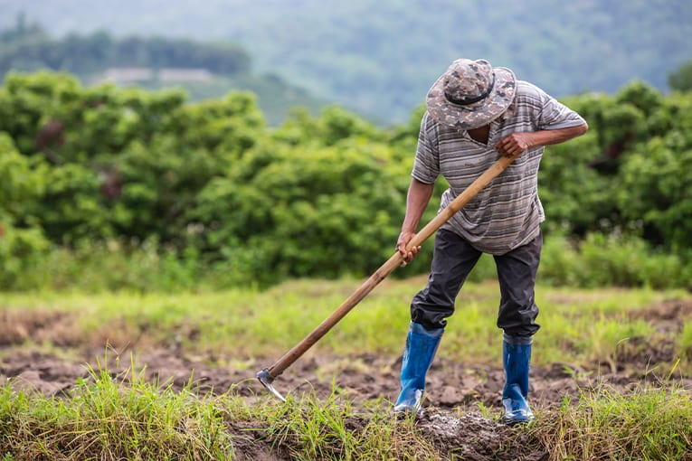 SOS manodopera in agricoltura: è possibile iscriversi per via telematica
